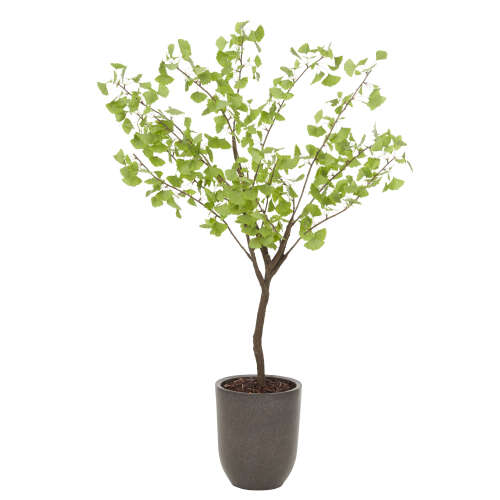 1 x Silver Birch Artificial Plant - Large - Green